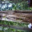 熱帯雨林の植物1